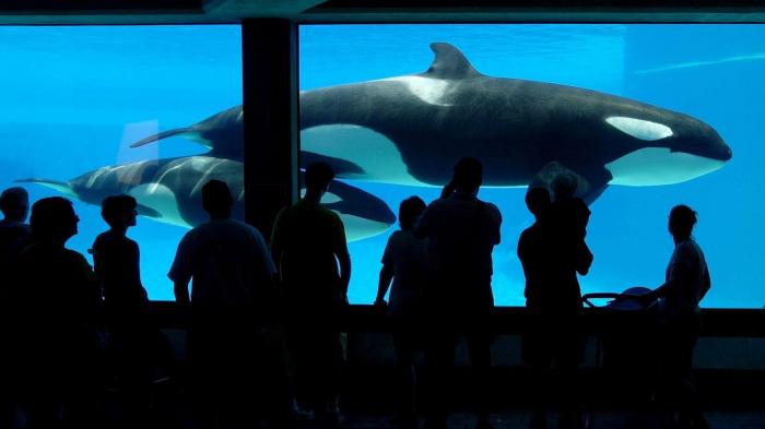 Le Canada interdit la captivité des baleines et des dauphins