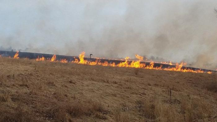 13 hektardan çox taxıl sahəsi yanıb