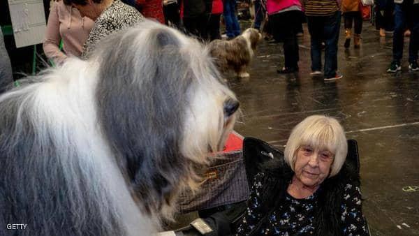 دراسة: الحيوانات تساعد المسنين في السيطرة على الآلام المزمنة