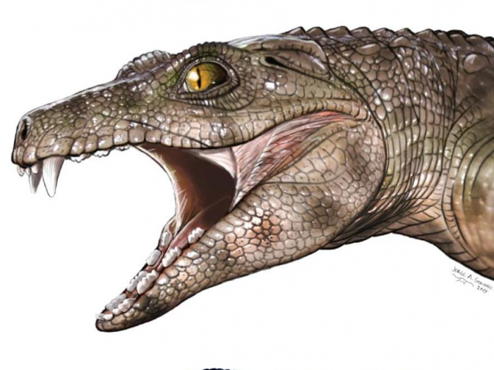 Crocodiles living 200 million years ago were vegetarians, study finds