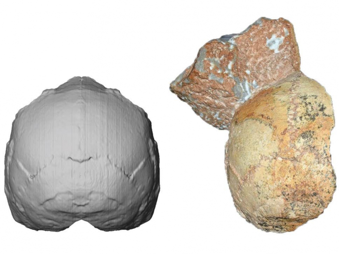 210,000-year-old skull earliest evidence of modern humans in Eurasia
