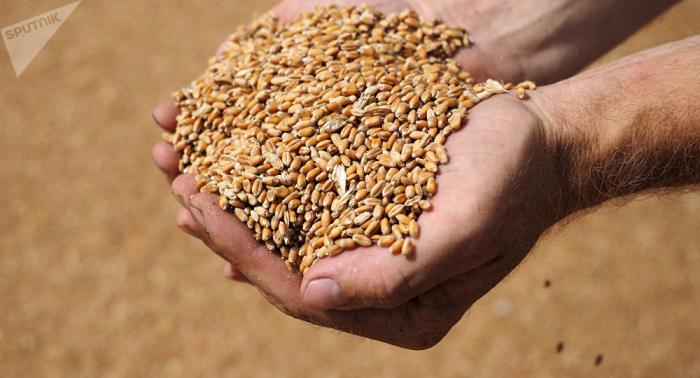 Russland bleibt weltgrößter Weizenexporteur - Experten