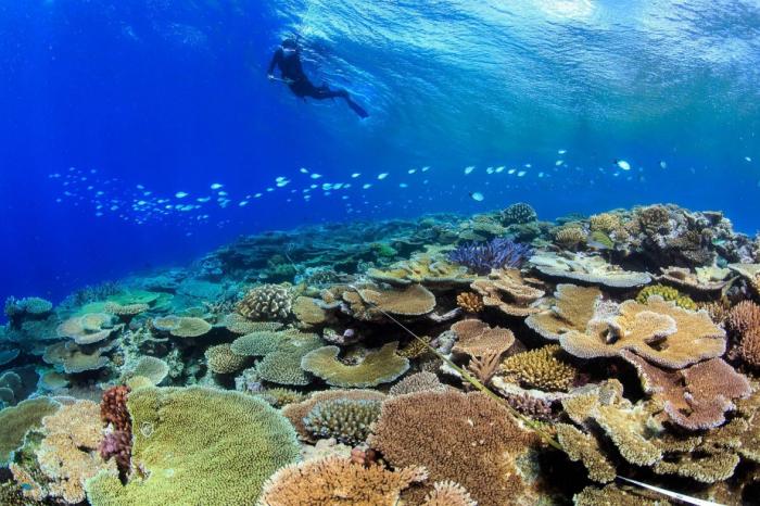 Grande barrière de corail: des mesures contre le changement climatique réclamées