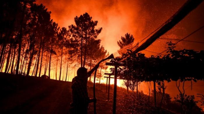 Portugal-  Bislang 20 Verletzte durch Waldbrände