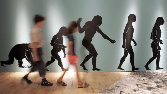 Bislang ältester Knochen eines Homo sapiens identifiziert