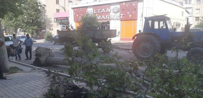Gəncədə külək ağacları aşırdı - Foto
