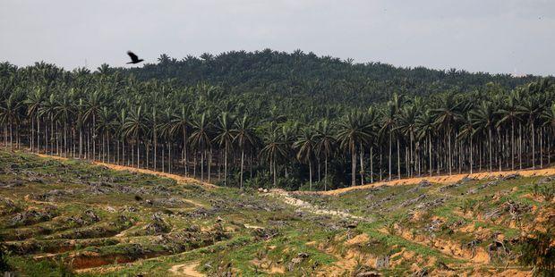 Huile de palme:   la Malaisie annonce une plainte contre l