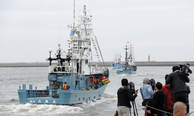 Japan resumes commercial whaling for first time in 30 years
