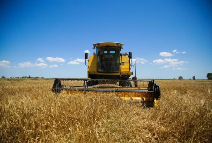Taxıl sahələrinin 89,7%-də biçin başa çatıb