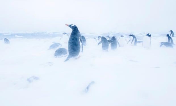 Manmade Antarctic snowstorm