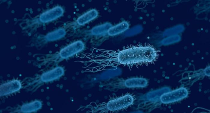 Des micro-organismes inconnus découverts en Crimée par des chercheurs