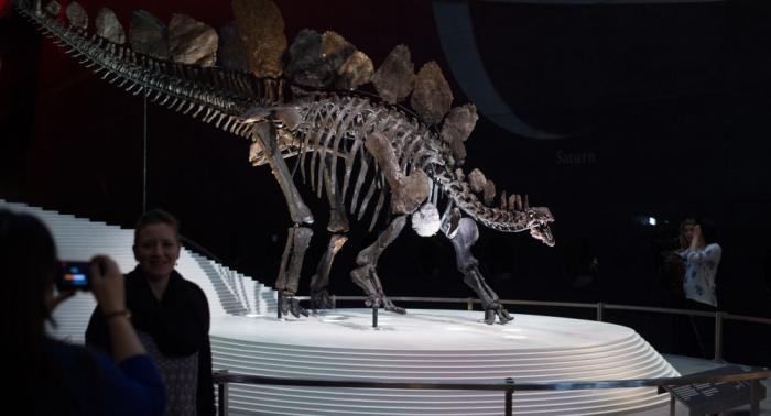 Les restes du plus ancien stégosaure au monde découverts au Maroc