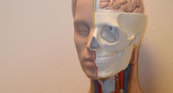 Révolution anatomique:  de nouveaux organes découverts dans le corps humain