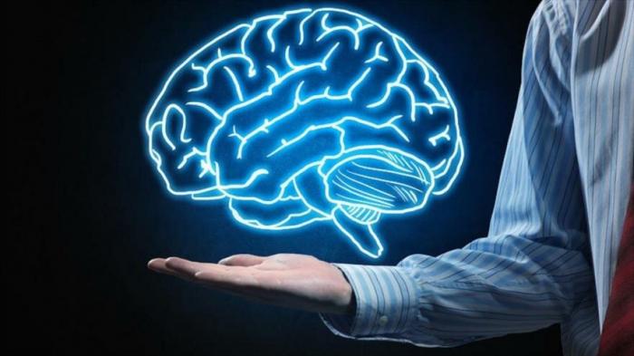 ¿Cómo son los cerebros de personas con excelente cultura general?