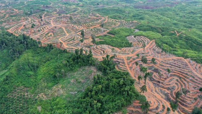 Stop abusing land, scientists warn