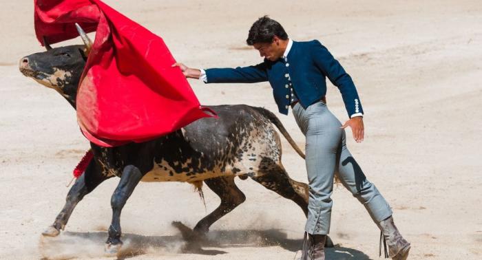 Stierkampf kehrt nach Mallorca zurück – Tierschützer entsetzt