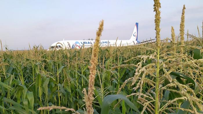 Resultado de imagen para Avión con más de 200 personas aterriza en campo de maíz en Rusia