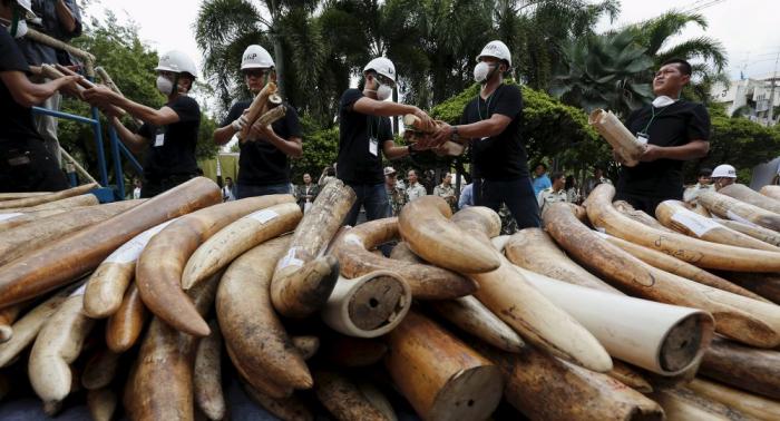 Australia prohibirá el comercio nacional de marfil y cuerno de rinoceronte