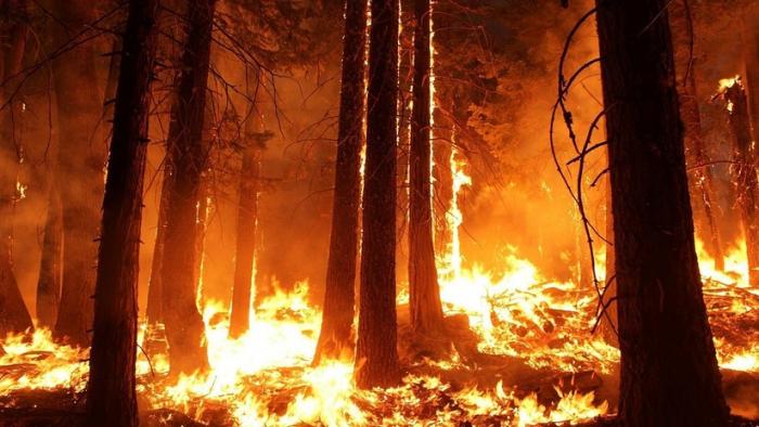 Así avanza el fuego durante los devastadores incendios forestales de la Amazonia y Bolivia-Sin Comentarios