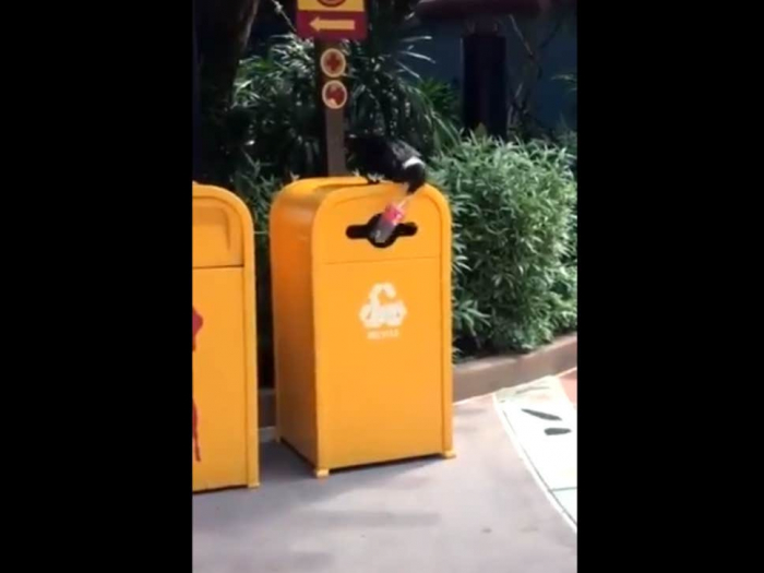 Bird filmed recycling plastic bottle-   VIDEO