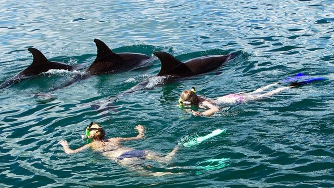 New Zealand bans dolphin swimming: People are loving them