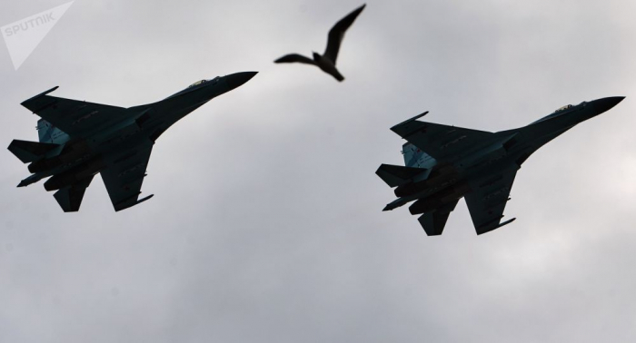 النورس والطائرات...كيف يمكن لطائر إسقاط طائرة