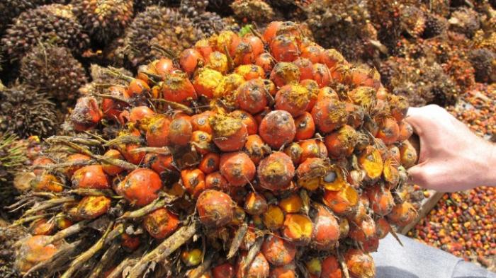 Gesundheitsgefährdende Stoffe in Palmölprodukten