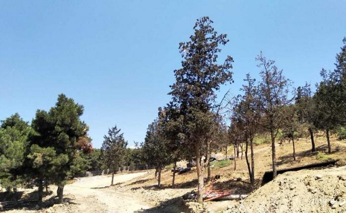 Ağacların kəsilməsi ilə bağlı müraciət araşdırıldı