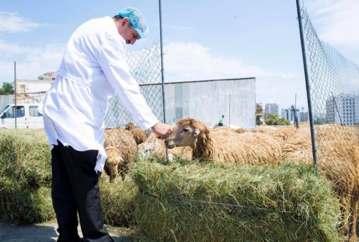 Qurbanlıq heyvanların kəsim yerləri dezinfeksiya edilir