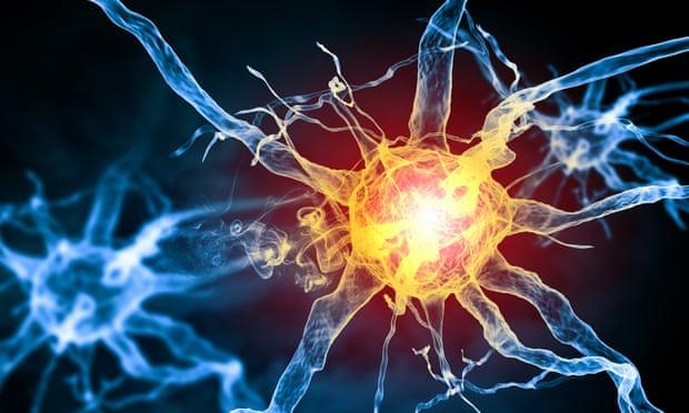Scientists discover new pain-sensing organ