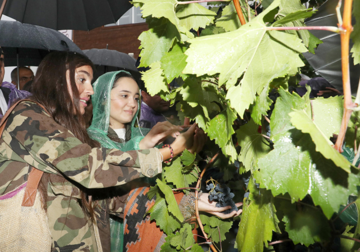 Vice-President of Heydar Aliyev Foundation views pavilions at First Grape and Wine Festival