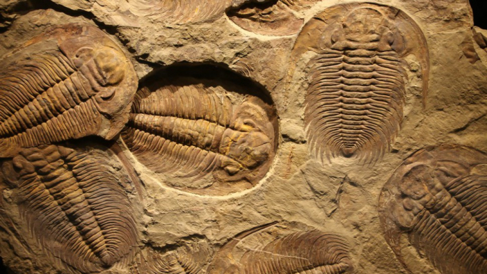 Why are fossils more often male?-  iWONDER