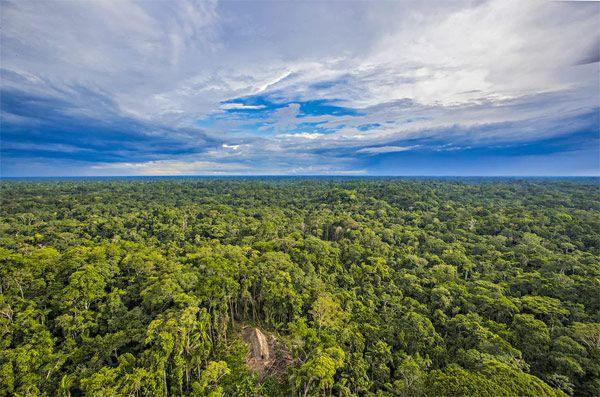 Amazon countries sign forest pact, promising to coordinate disaster responsen
