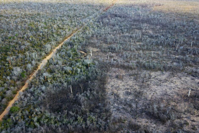 Madagascar forest destruction wiping out humans