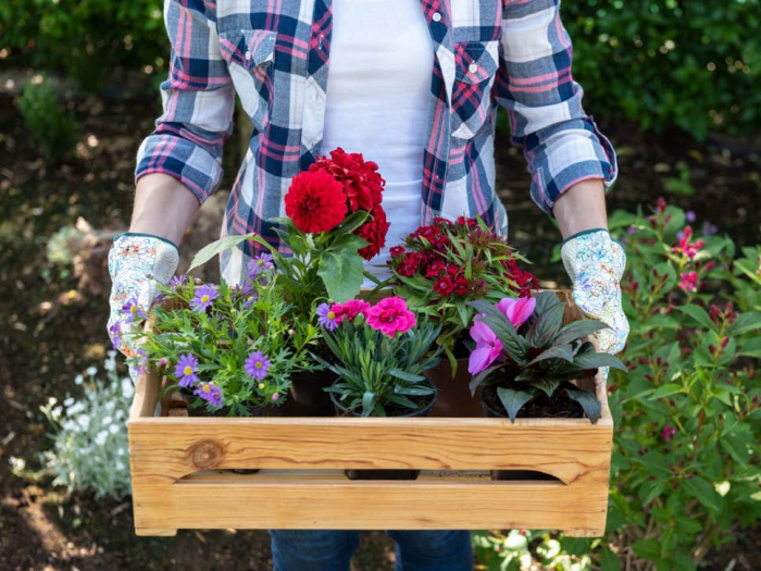 Why doctors are prescribing gardening for anxiety and depression