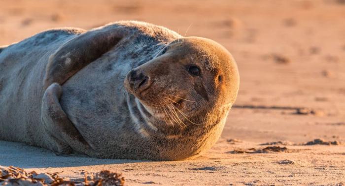 Mensch-Tier Zusammenarbeit: Robbe hilft Drogenkartell zu zerschlagen