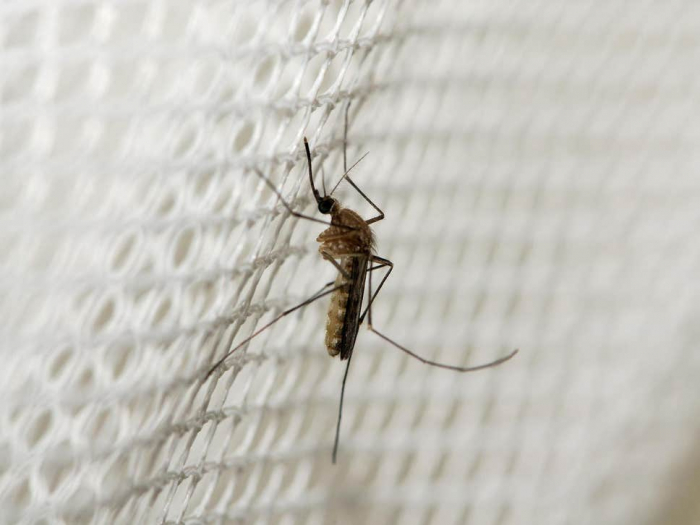 West Nile virus reaches Germany in 'sign of climate change'
