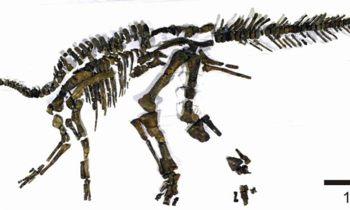 Nearly complete skeleton of a new dinosaur unearthed in Japan
