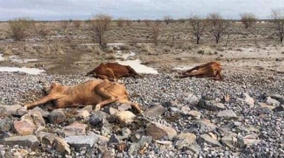 مدن أسترالية مُهددة بالعطش مع استمرار الجفاف