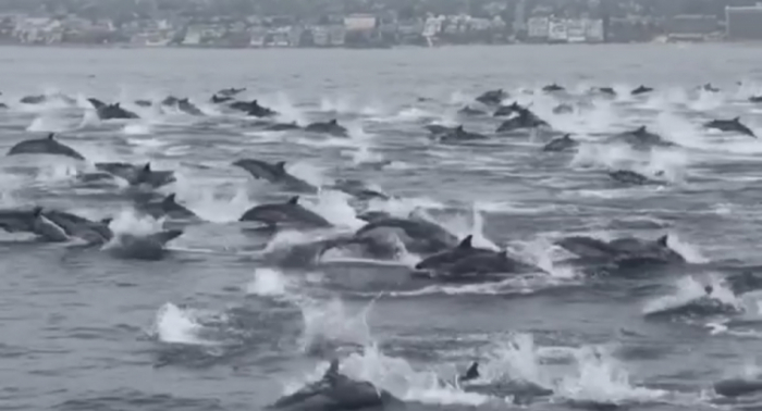 More than 130 dolphins die after mysterious mass stranding