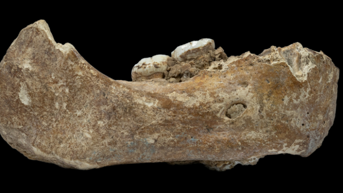 Skelett des Denisova-Urmenschen rekonstruiert