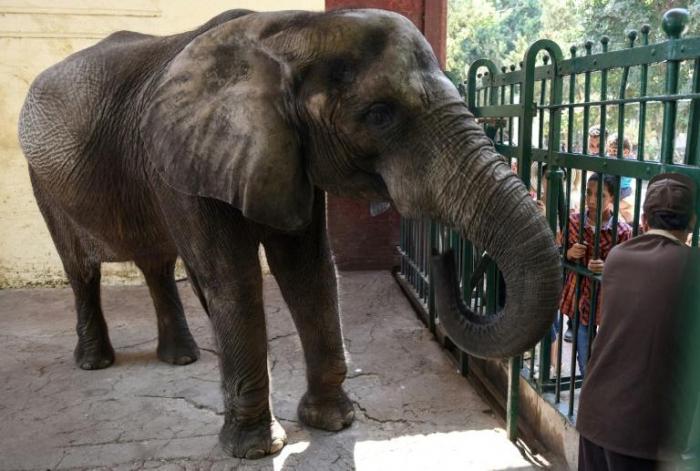 Égypte: mort du dernier éléphant d
