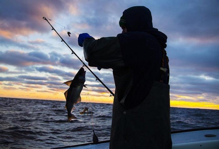 Qanunsuz balıq ovlayan 182 nəfər cəzalandırılıb