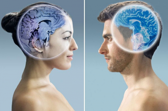 The myth of the   gendered   brain