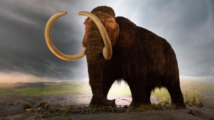 Científicos descubren el lugar en que se extinguieron los últimos mamuts lanudos