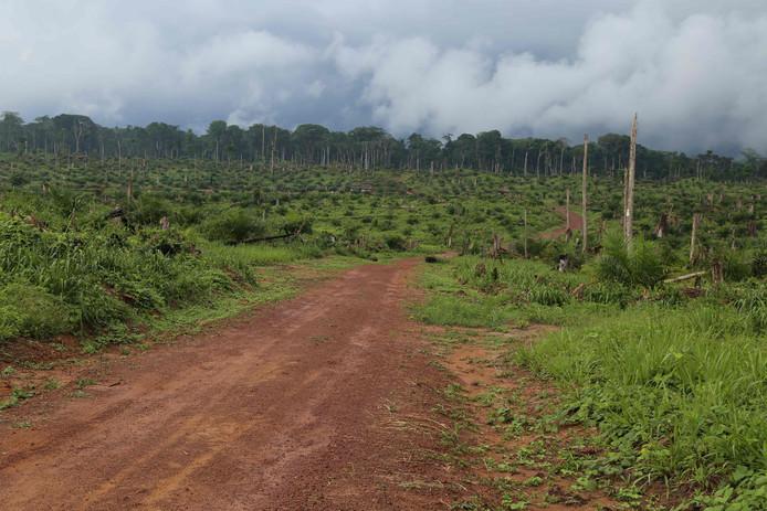 La déforestation en Amazonie a augmenté de 93%