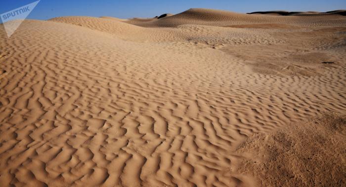 """""""Zwei Prozent der Sahara"""": Werden Algen den Energiebedarf der Welt decken?"""
