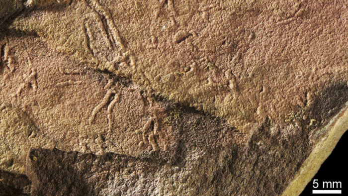 Hallan la forma compleja de vida más antigua en la Tierra, de hace 2.000 millones de años