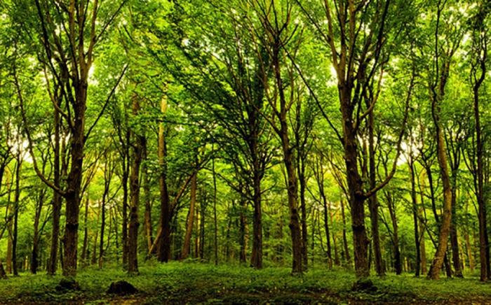 Azerbaiyán plantará un pequeño bosque que representa la imagen de Nasimí