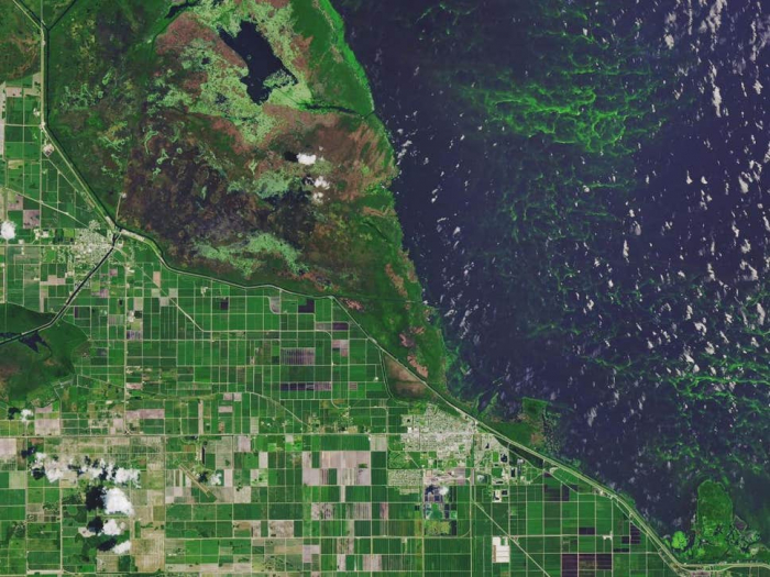 Toxic algal blooms increasing in lakes worldwide, study finds